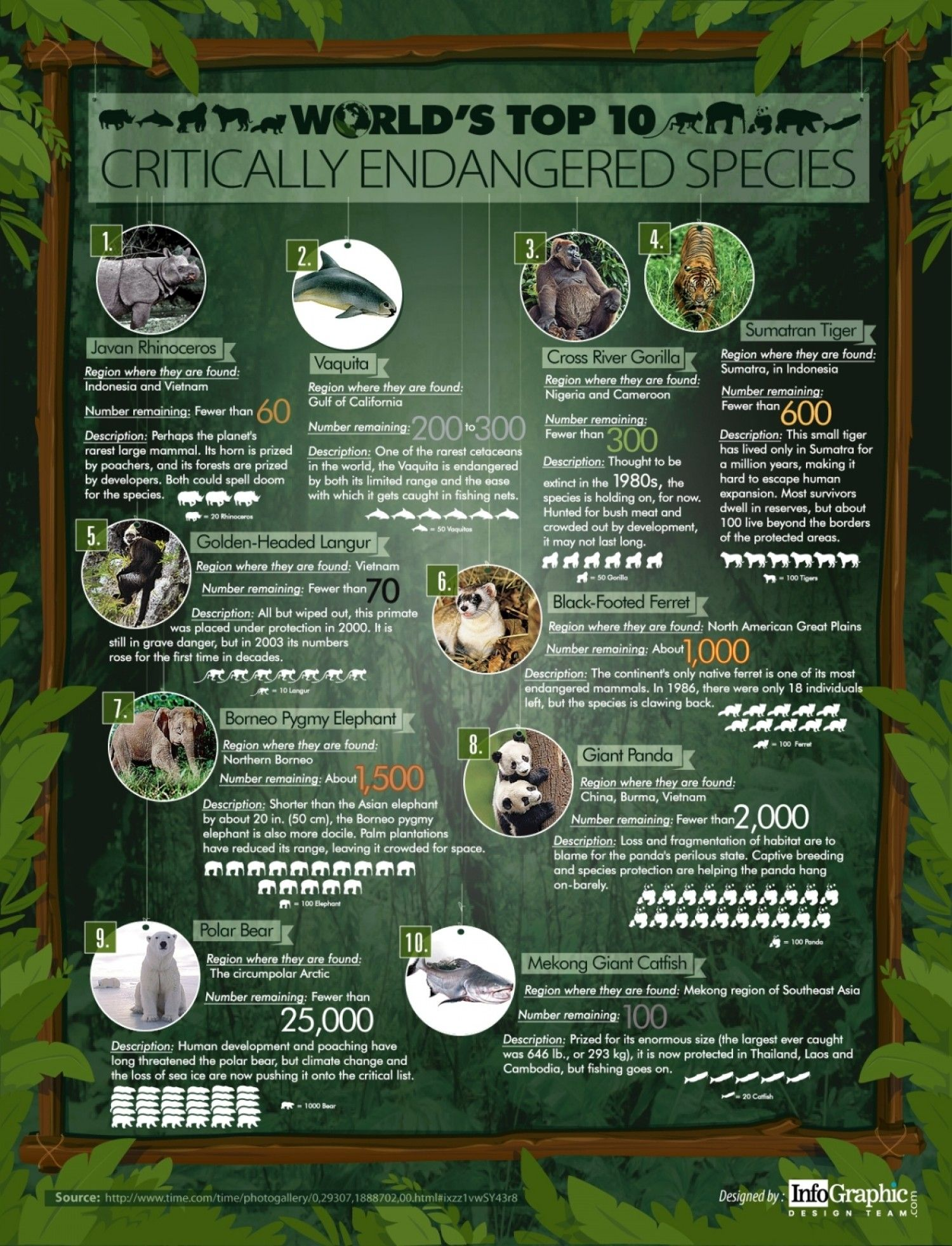 World S Top 10 Critically Endangered Species Infographic