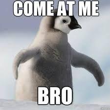 a53ed794dda2787abc9f42ac1d0703d8 come at me, bro! cat meme funny animals humor cute penguin,Cute Penguin Meme