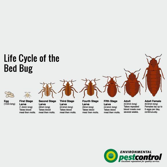 Environmental Pest Control Bed Bugs Did You Know Pest Control Bed Bugs Bed Bugs Pest Control