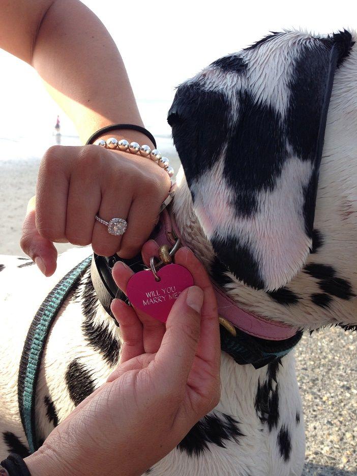 Joe And Justina S Dog Tag Proposal Dog Proposal Wedding Event