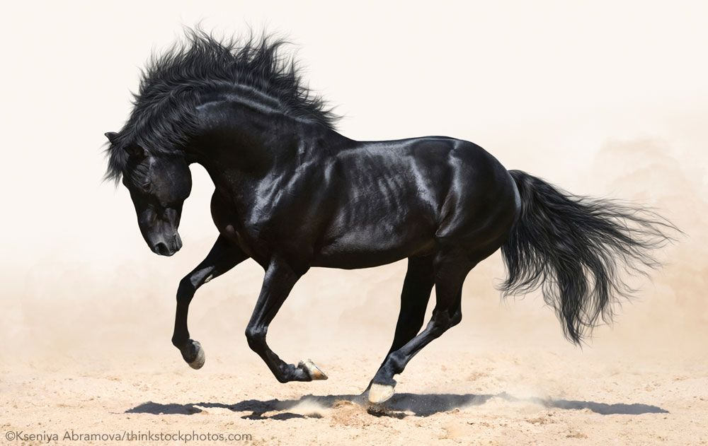 ThereS A Reason Black Horses Capture The Imaginations Of Writers