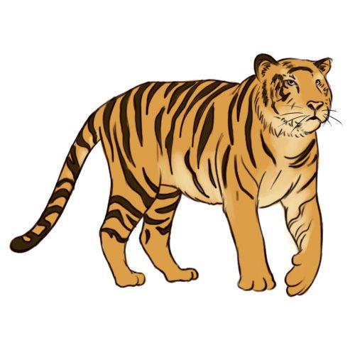 dibujo-de-tigre.jpg (500×500) | TIGRE | Pinterest