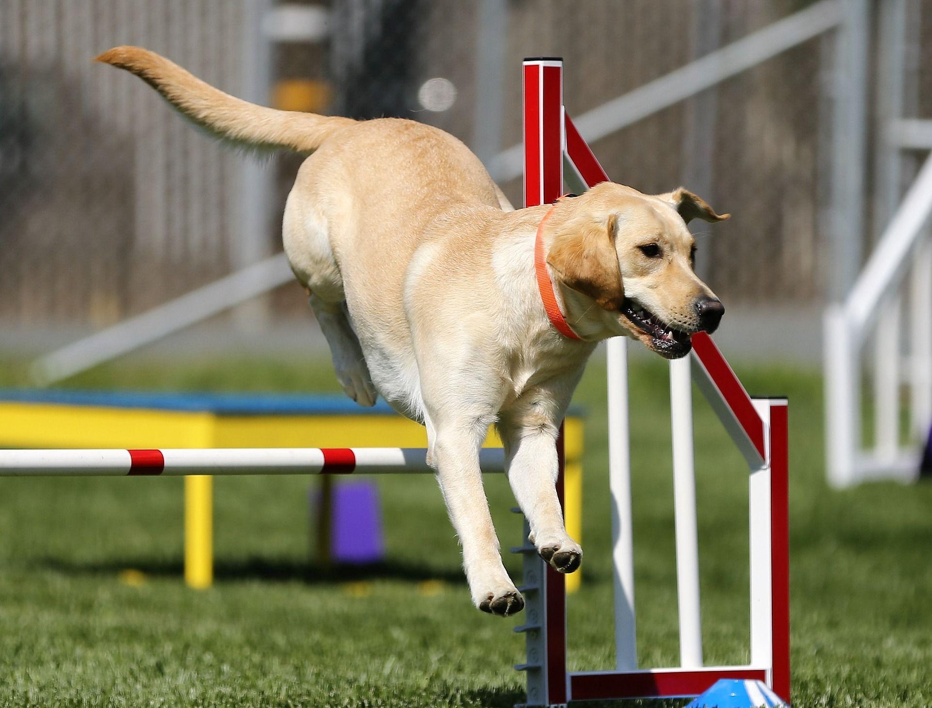 Cool sports dog free stock images pinterest sports dog