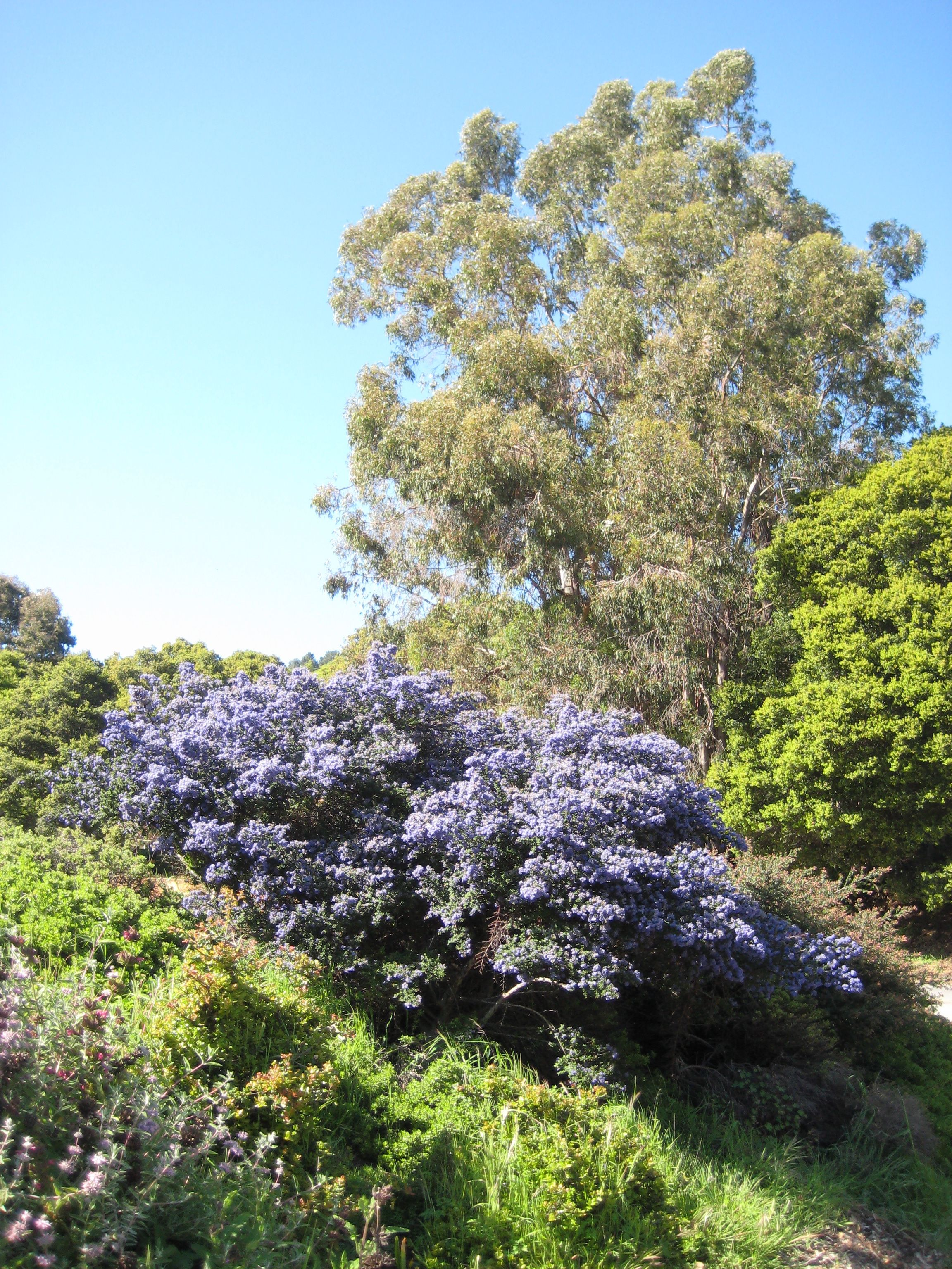University of California at Berkeley Botanical Garden