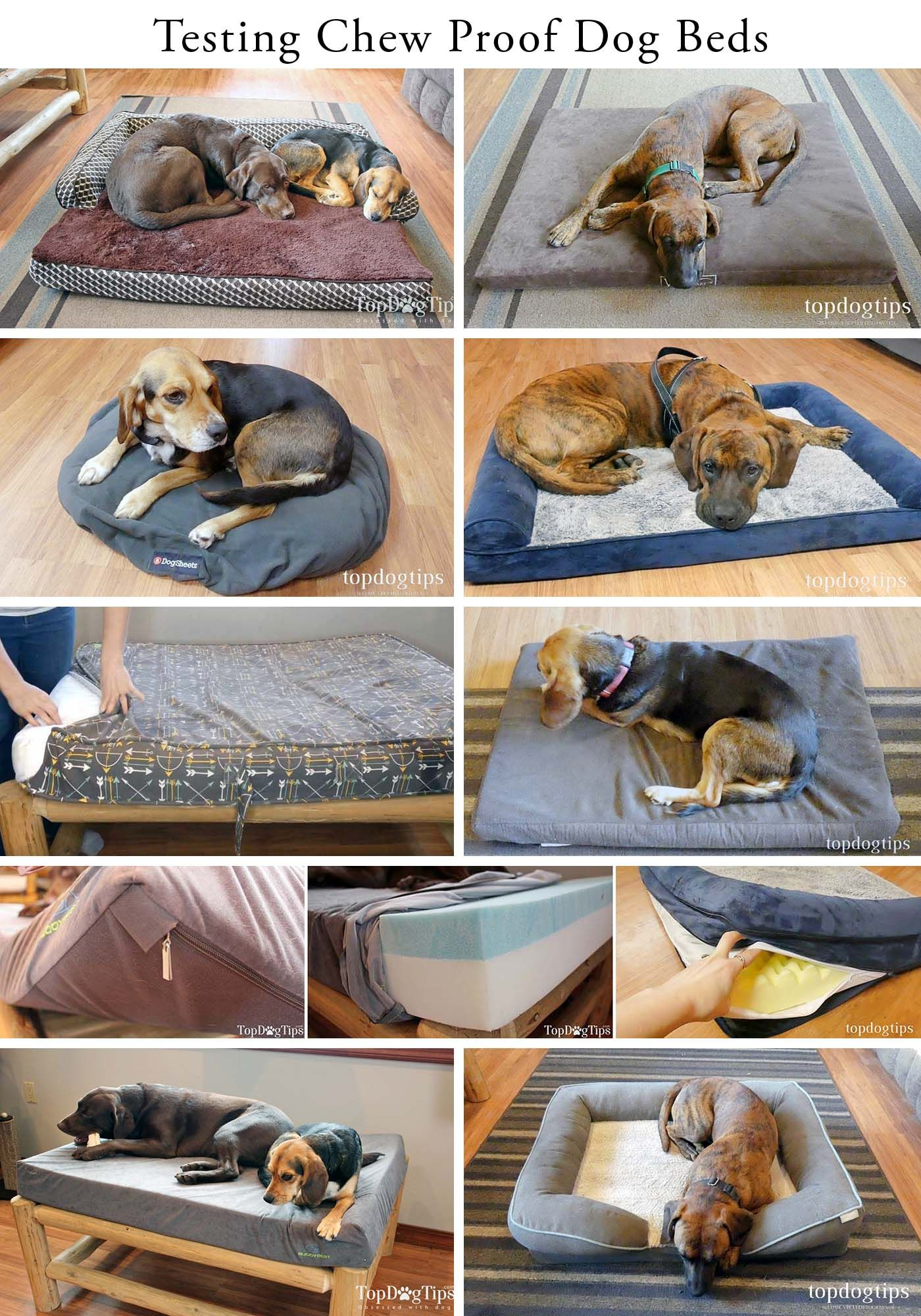 6 Most Chew Resistant Dog Beds 2020 Kuranda Vs K9 Ballistics Vs Other Dog Bed Indestructable Dog Bed Cool Dog Beds