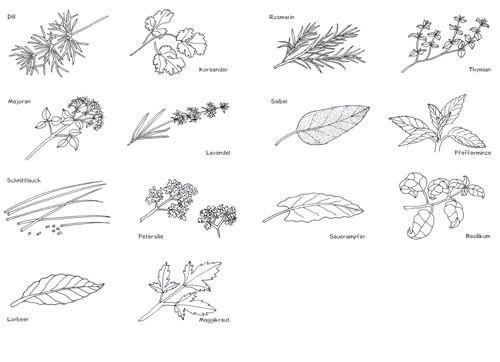 mini w rterb cher pflanzen pdf kr uter pinterest kr uter pflanzen und natur. Black Bedroom Furniture Sets. Home Design Ideas
