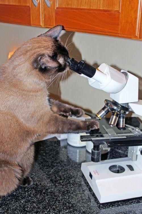 Keep Calm and Love Science: Laboratory Cat | Biyoloji