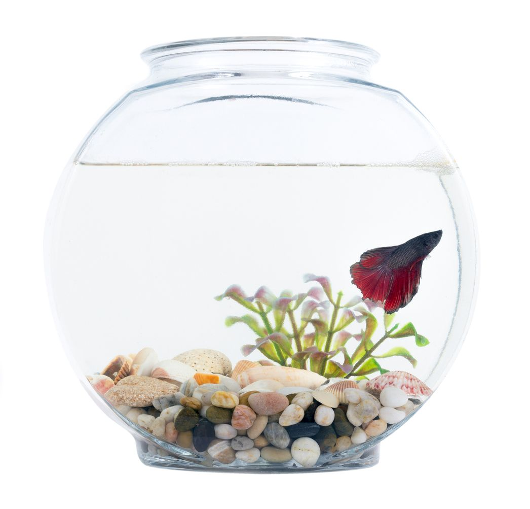 What Kind of Fish Can Live in a Bowl? | Cuteness | Animals ...