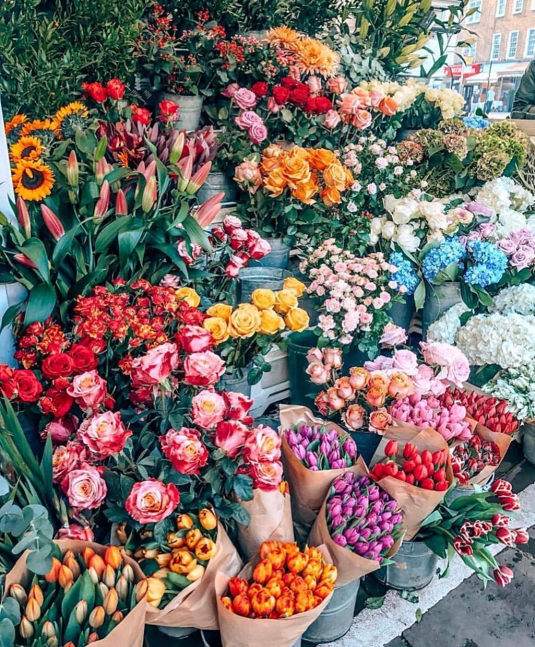 Friday in bloom 💐 regram katie.one Blühende pflanzen