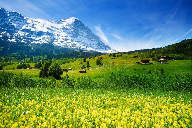Yellow Flowers Field Beautiful Swiss Landscape Blooming Yellow Flowers Field O Ad Beautiful Sw Green Landscape Spring Landscape Beautiful Wallpaper Hd