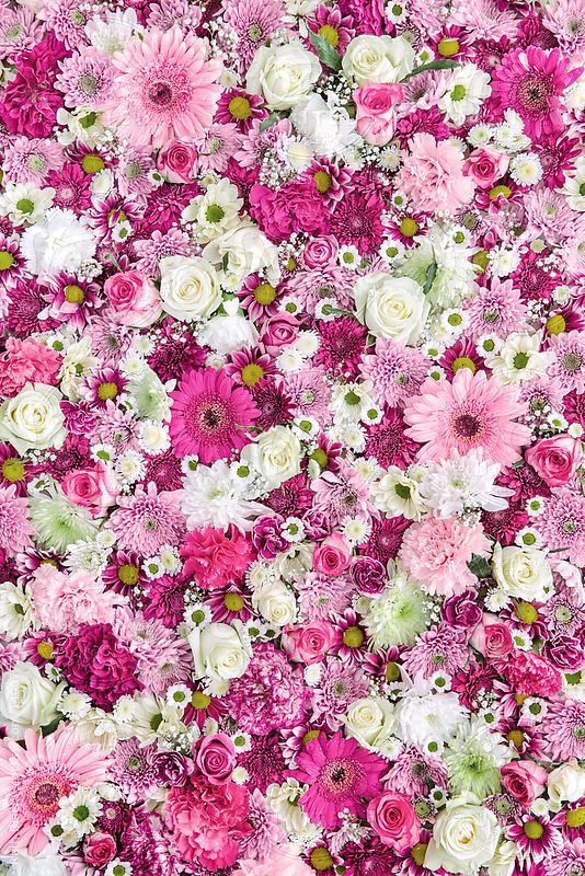 Flower wall background by Ruth Black Flower, Background