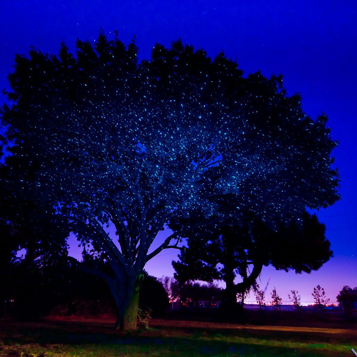 The Blue Illuminator Light Creates A Frost Look On Trees And Homes Indigo Twilight Blue Illum Laser Lights Laser Christmas Lights Christmas Lights
