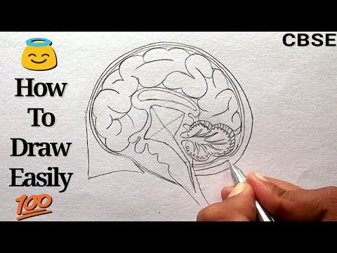 How to Draw Human Brain Step by step for Beginners ...