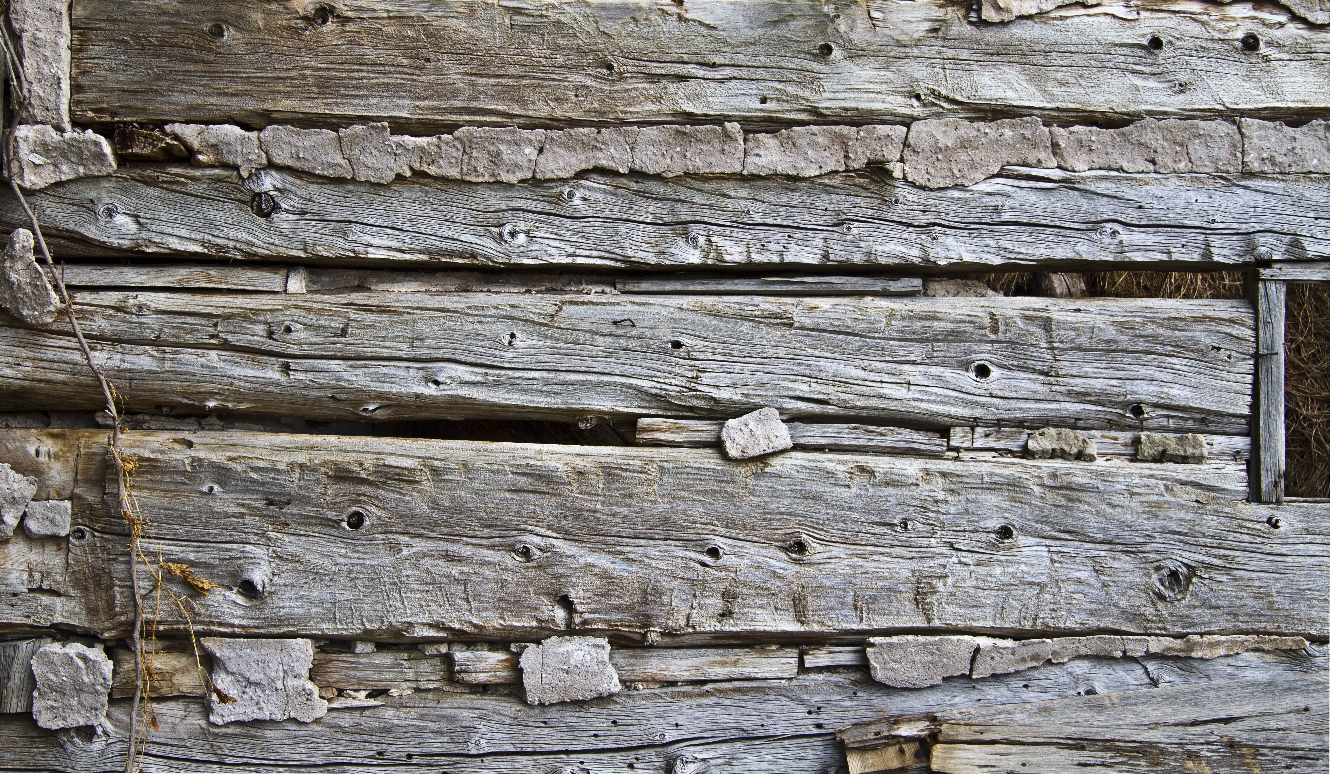 OF RULES AND LOGS AND FERAL DOGS | Wabi sabi and Logs