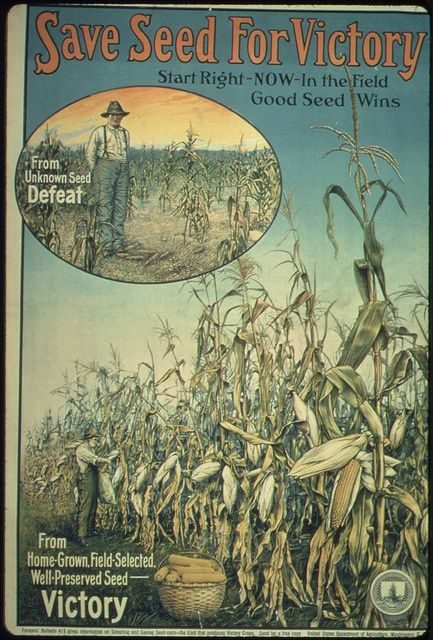 Save Seed for Victory poster, victory garden, ca1917 - ca1919 vintage