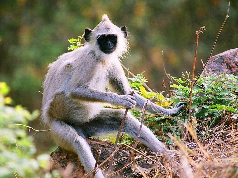 Chinnar Wildlife Sanctuary - in Kerala, India | Flora and