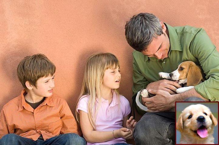 Puppy socialization checklist uk