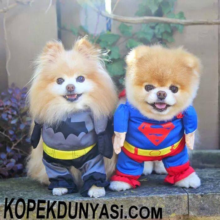 Süper Güçlü Olduğumuz Doğrudur :) #animalesbebébonitos