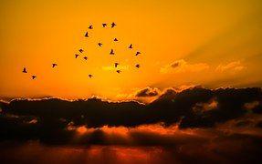 Taivas, Linnut, Pilvi, Orange, Luonne