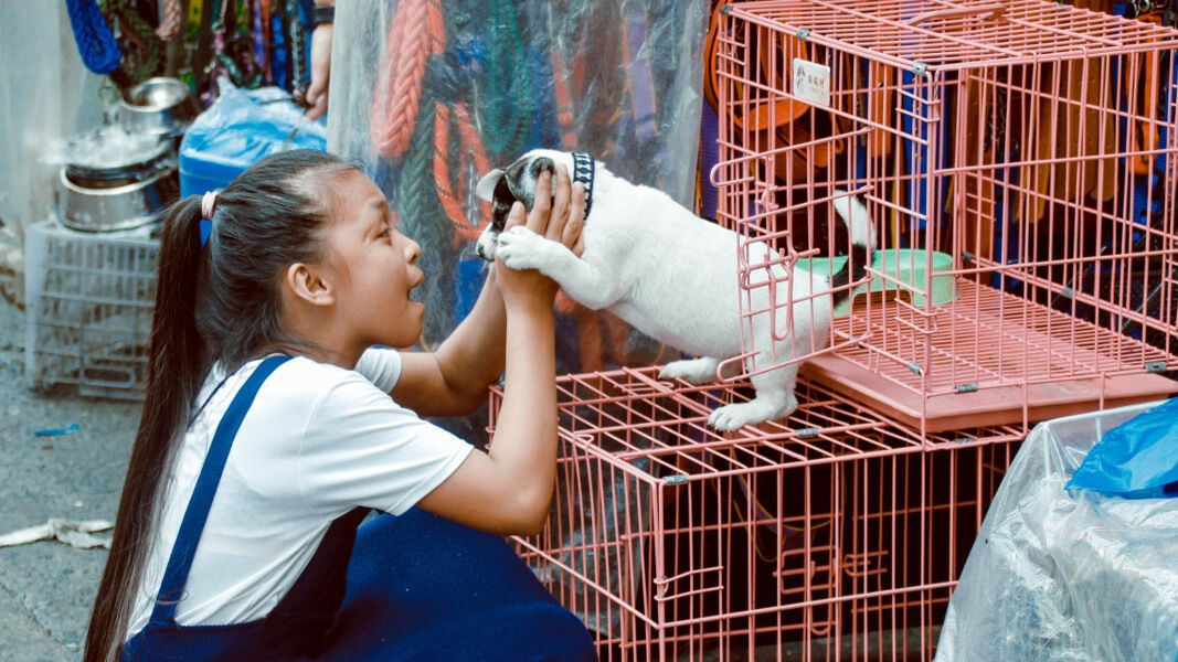 Hanoi vietnams first city to ban dog meat trade