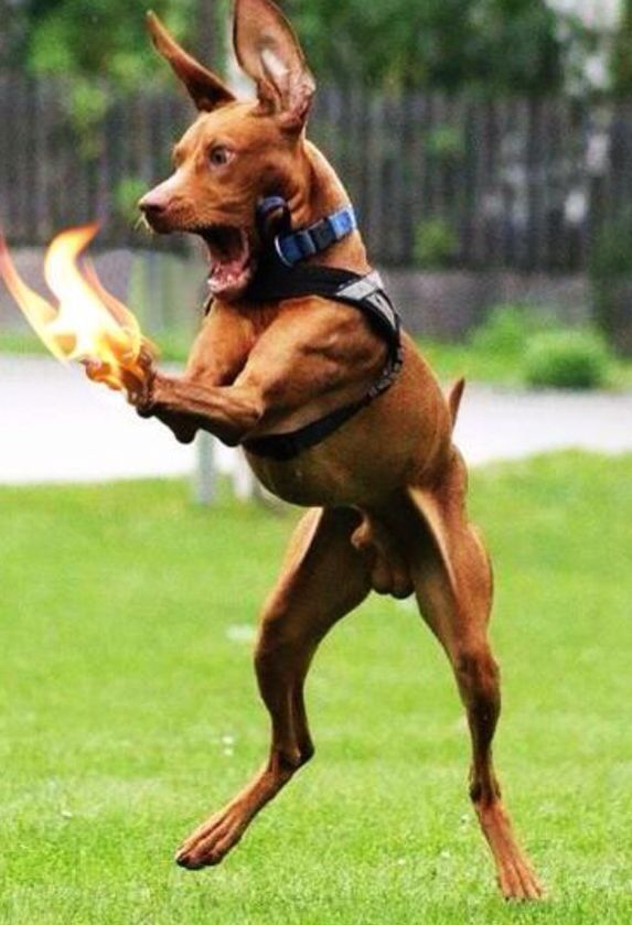 MY HANDS ARE BURNING!!! | Funny | Funny dog videos, Funny