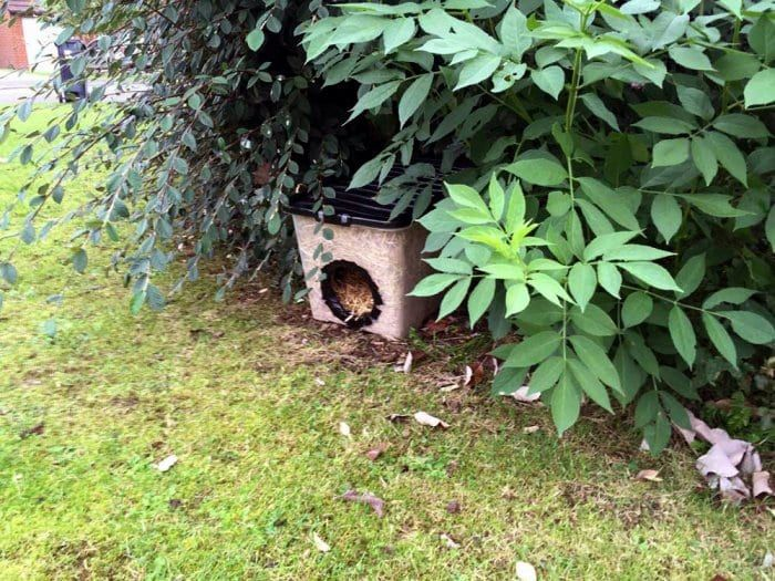 How to Build a Feral Cat Shelter for Winter Feral cat