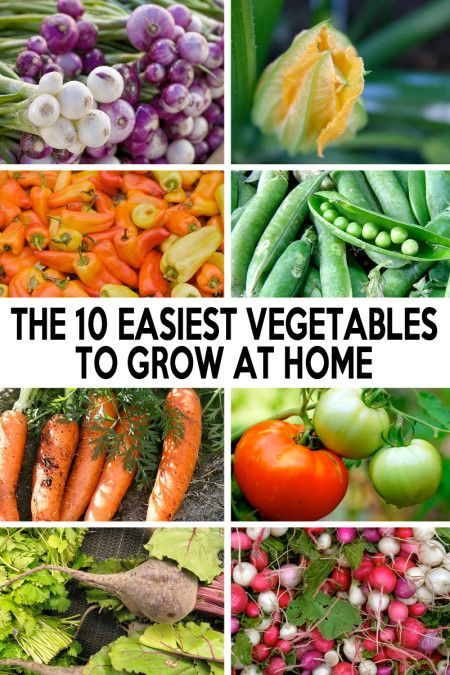 The 10 Easiest Vegetables To Grow At Home Easy Vegetables To
