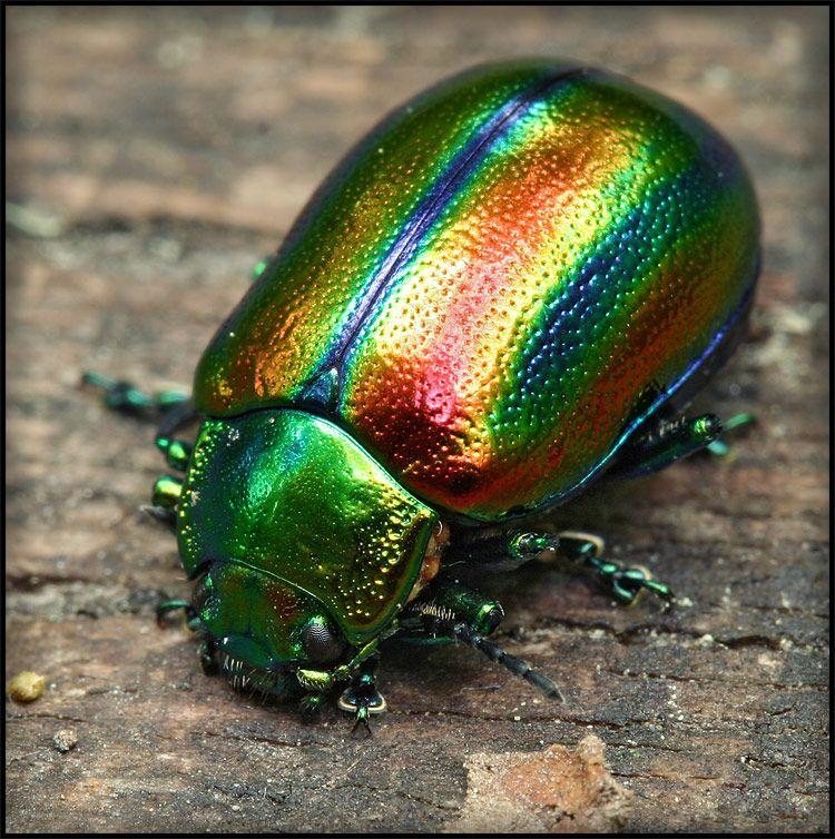 фото красивых блестящих жуков потребностей