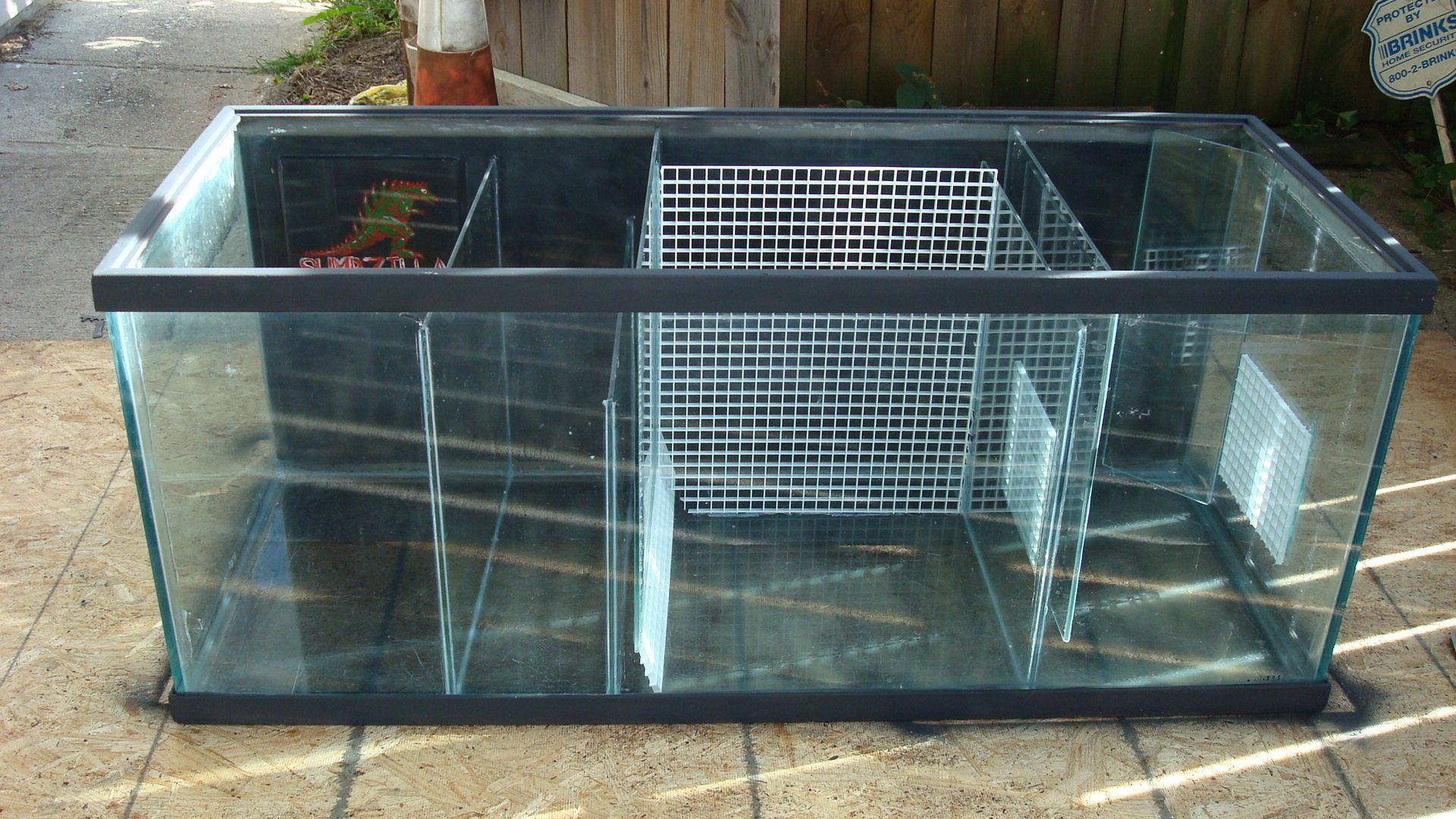 build a sump tank saltwater tank pinterest aquarium