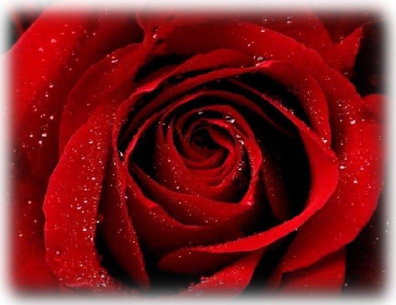 Sweet Invitations For Romantic Valentine Weddings Red Roses Wedding Invitation Ideas 812x626