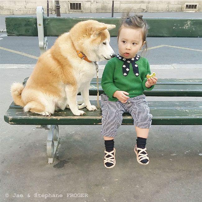 パリの柴犬とちいさなパリジェンヌのしあわせな毎日 写真特集 朝日新聞デジタル w 柴犬 癒し 犬 可愛い犬
