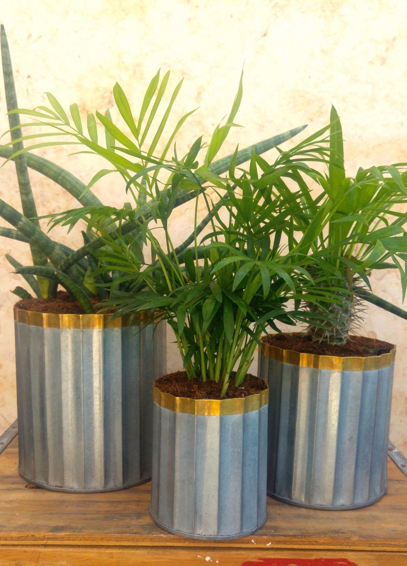 כלי פח גלי עם סיומת ניקל לצמחים ולאחסון Go green, Plants