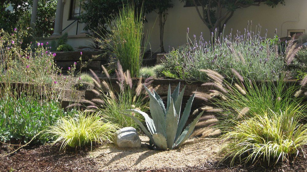 California Landscaping Ideas grasses, agave, and lavender. | the new french landscape