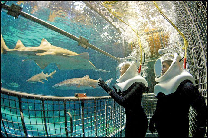 Sharks Deep Dive Orlando Sea World Shark Cage Water Adventure