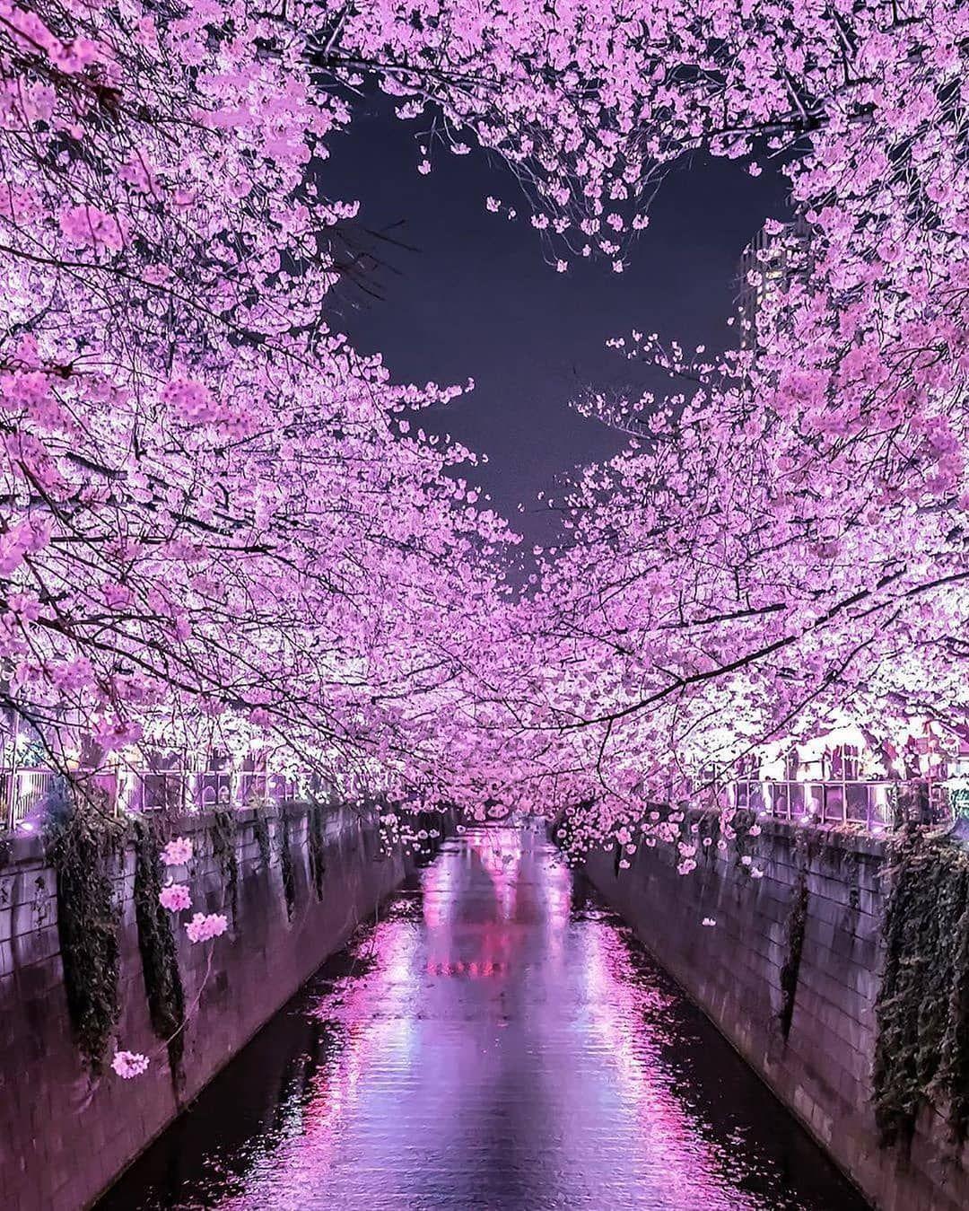 By Magical Days In Japan By Number Shiiix Magical Days In Japan Subscribe To Travelbloggerindonesia C Di 2021 Pemandangan Wisata Jepang Sakura
