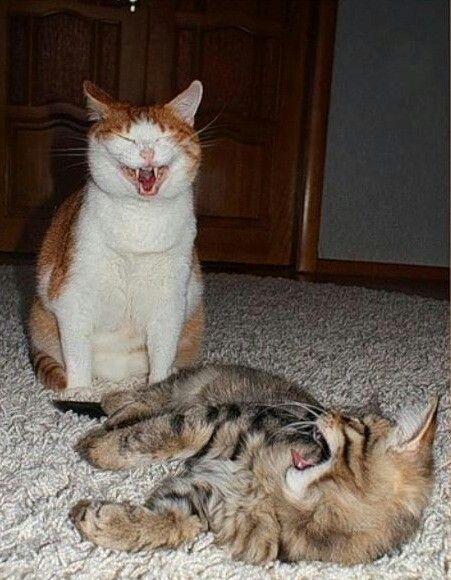 Смешные картинки не расстраивайся