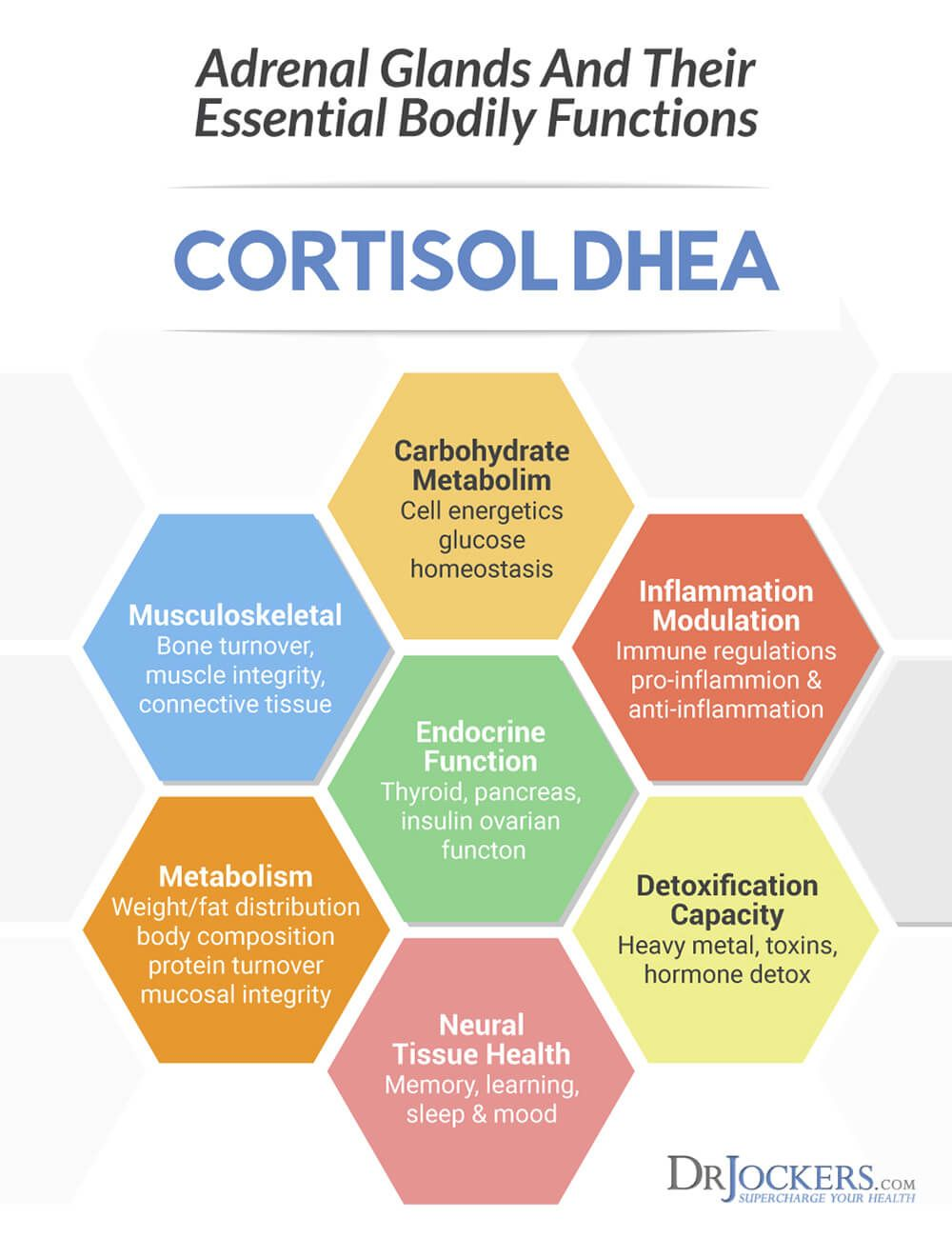 7 Ways To Balance Cortisol Levels Cortisol, High