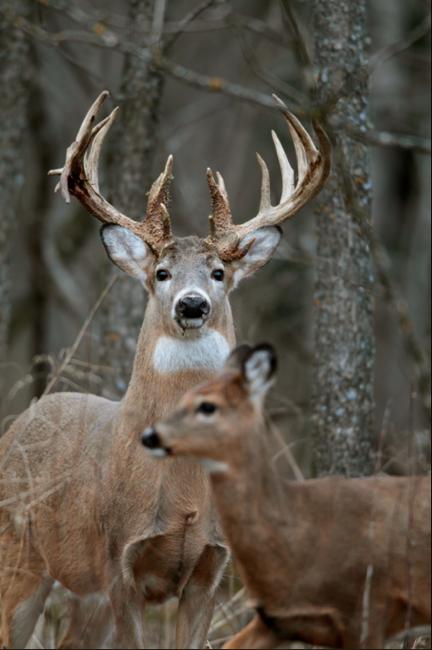 Pin by Abigail Drake on My Motivation Deer, Whitetail
