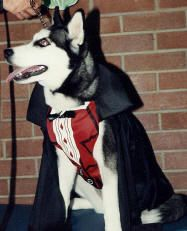 costumes for huskies google search