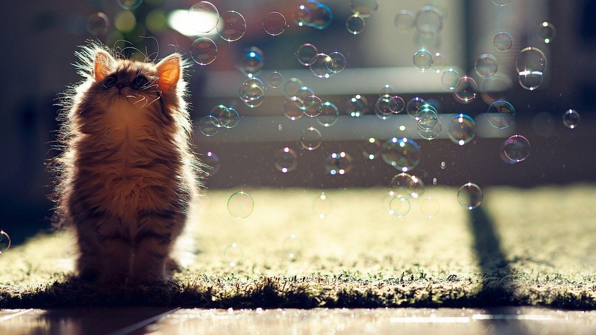Cute Fluffy Kitten Hd Wallpaper 1920x1080 Id 45396