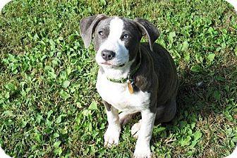 Pin By Toby A On Border Beagles Adoptable Beagle Beagle Beagle Mix