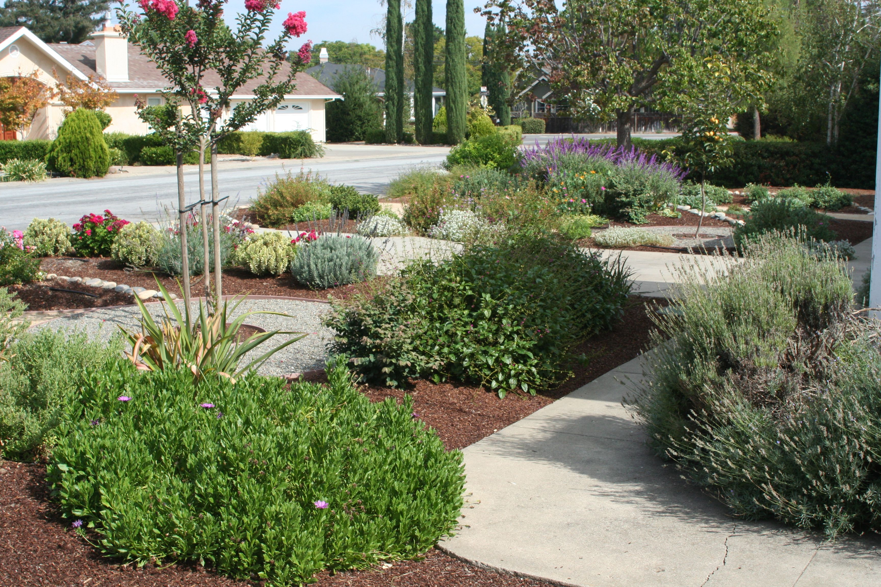 frugal drought tolerant landscaping