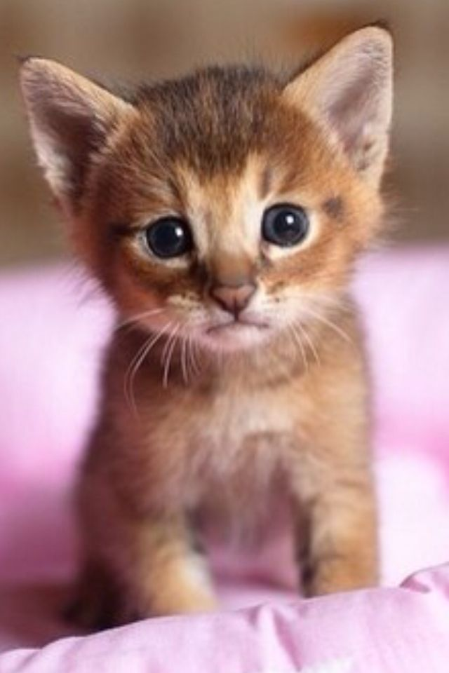 Cute Kitten All Alone in a Big Bed Cat, Animal and