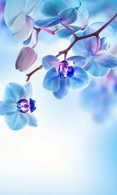 Spring Flowers Live Wallpaper For Android App Free Download Blue