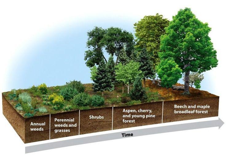a54bf87e29adcfba2358185dc4e30047 secondary succession it occurs where soil is present soil food
