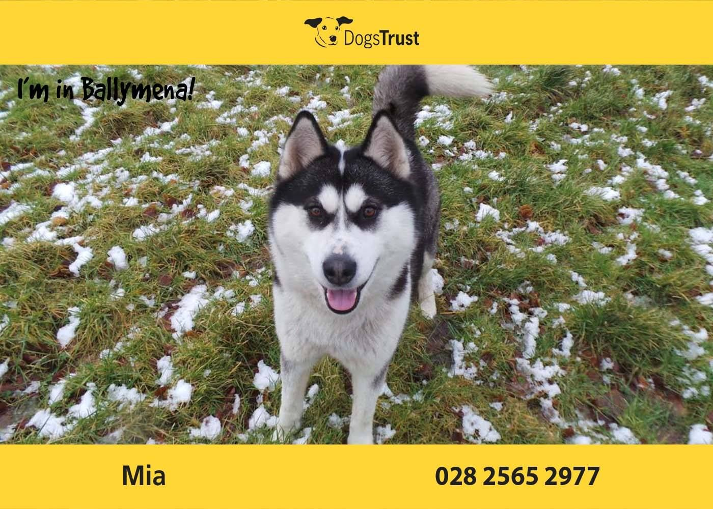 Mia At Dogs Trust Ballymena Is A Real Character Looking For An Active Home Where She Can Enjoy Long Walks She Loves To Play Ball A Dogs Trust Dogs Rescue Dogs