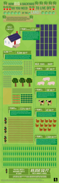 How big a backyard would you need to live off the land?Graphic illustrates how much backyard square footage would be needed to feed a family of 4 a well-rounded diet of meat, dairy, eggs, wheat, fruits and veggies for a year. Not surprisingly, it's a lot.