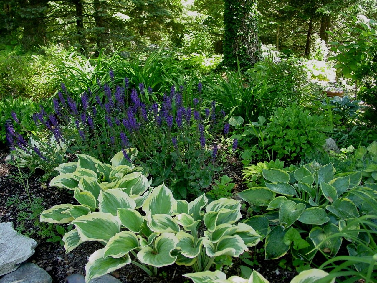 Superb hosta gardens 10 hosta garden native landscapes for Amenagement paysager petit terrain