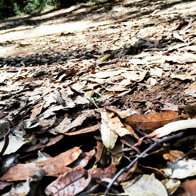 Me gustas como para invitarte a pisar hojas secas una de estas tardes. Jaime Sabines.