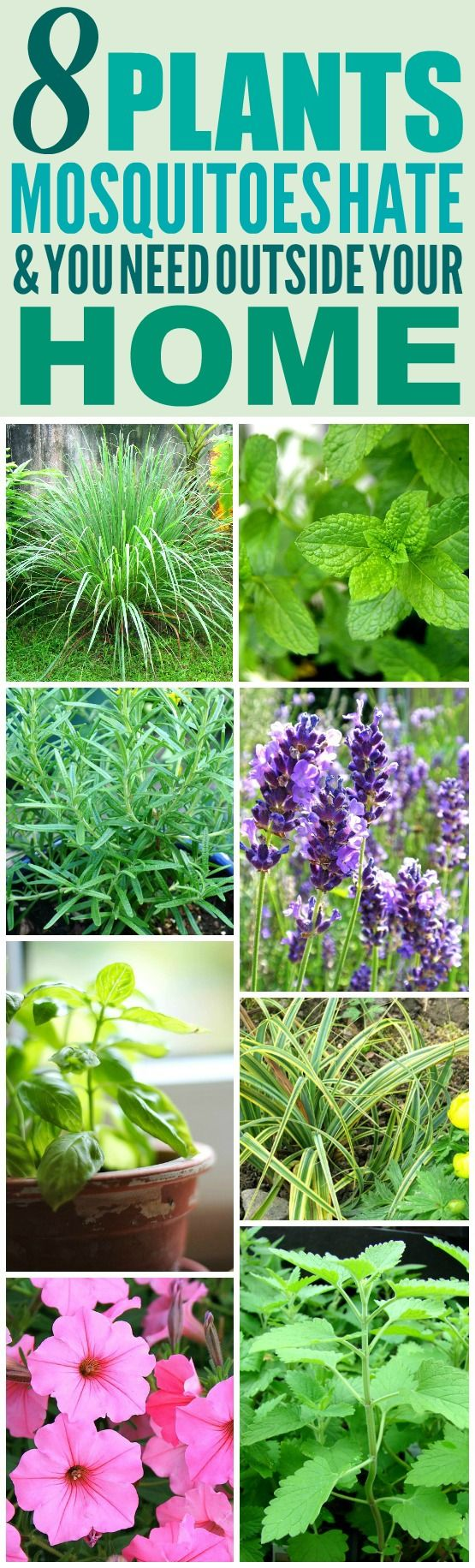 8 Amazing Plants That'll Repel Mosquitoes (And Other Pests!) #mosquitoplants